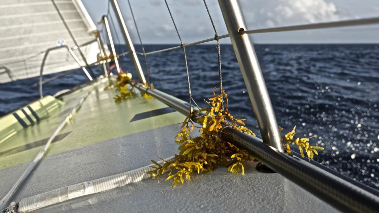 Volvo Ocean Race, VOR, 2014-15, onboard, OBR, Leg6, Team Brunel, nature, sargasso